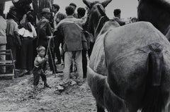 Fira de Sevilla /Fira de bestiar