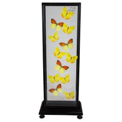 Yellow Butterflies in Flight Mounted in Painted Black Frame