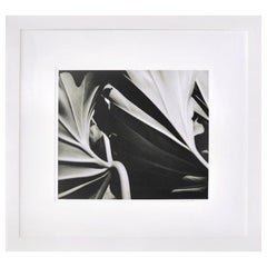 Ying Yang Two Leaves, Framed Black and White Nature Photography, 2000-2005