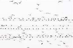 kawau 002  – Yoshinori Mizutani, Colour, Photography, Birds on the wire, Sky