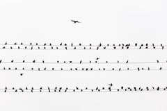 kawau 004  – Yoshinori Mizutani, Colour, Photography, Birds on the wire, Sky
