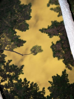 Moonlight 01  – Yoshinori Mizutani, Colour, Photography, Art, Sky, Forest, Gold