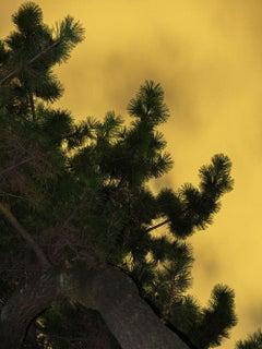 Moonlight 04  – Yoshinori Mizutani, Colour, Photography, Canary, Art, Sky