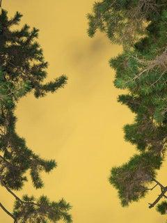 Moonlight 05  – Yoshinori Mizutani, Colour, Photography, Canary, Art, Sky