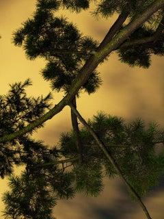 Moonlight 06  – Yoshinori Mizutani, Colour, Photography, Art, Sky, Forest, Gold