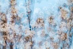 sakura 002 – Yoshinori Mizutani, Colour, Photography, Japan, Sakura, Spring