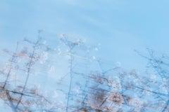 sakura 003 – Yoshinori Mizutani, Colour, Photography, Japan, Sakura, Spring
