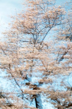 sakura 006 – Yoshinori Mizutani, Colour, Photography, Japan, Sakura, Spring