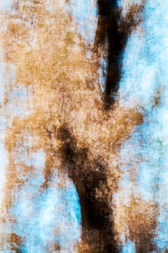 sakura 008 – Yoshinori Mizutani, Colour, Photography, Japan, Sakura, Spring