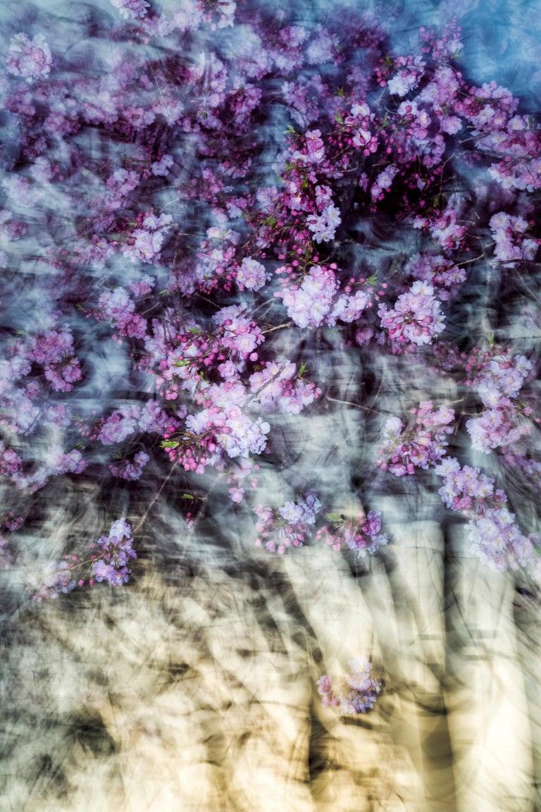 <i>sakura 011</i>, 2015, by Yoshinori Mizutani