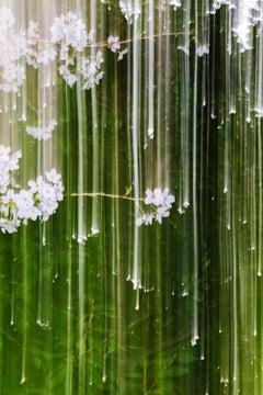 sakura 014  – Yoshinori Mizutani, Colour, Photography, Spring, Japan, Sakura