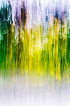 sakura 018 – Yoshinori Mizutani, Colour, Photography, Japan, Sakura, Spring