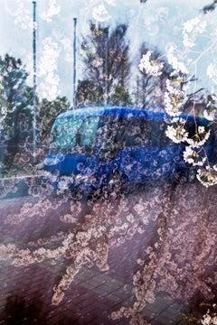 sakura 027  – Yoshinori Mizutani, Colour, Photography, Japan, Sakura, Spring