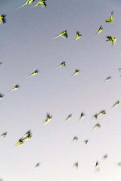 Tokyo Parrots 001  – Yoshinori Mizutani, Colour, Photography, Canary, Art, Sky