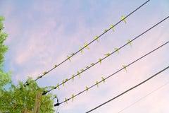 Tokyo Parrots 005 – Yoshinori Mizutani, Colour, Photography, Canary, Art, Sky