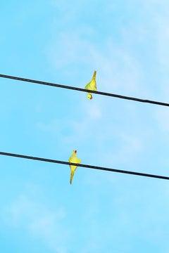 Tokyo Parrots 048  – Yoshinori Mizutani, Colour, Photography, Canary, Art, Sky