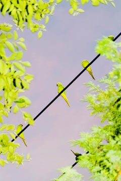 Tokyo Parrots 052  – Yoshinori Mizutani, Colour, Photography, Canary, Art, Sky