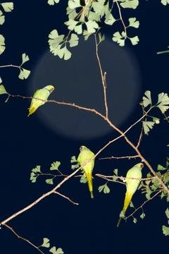 Tokyo Parrots 054  – Yoshinori Mizutani, Colour, Photography, Canary, Art, Sky