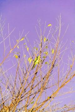 Tokyo Parrots 055  – Yoshinori Mizutani, Colour, Photography, Canary, Art, Sky