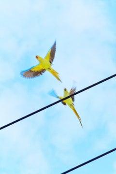 Tokyo Parrots 056  – Yoshinori Mizutani, Colour, Photography, Birds, Yellow, Art