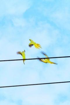 Tokyo Parrots 057  – Yoshinori Mizutani, Colour, Photography, Canary, Art, Sky