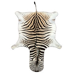 Zebra Hide Rug, South Africa, Chocolate Brown