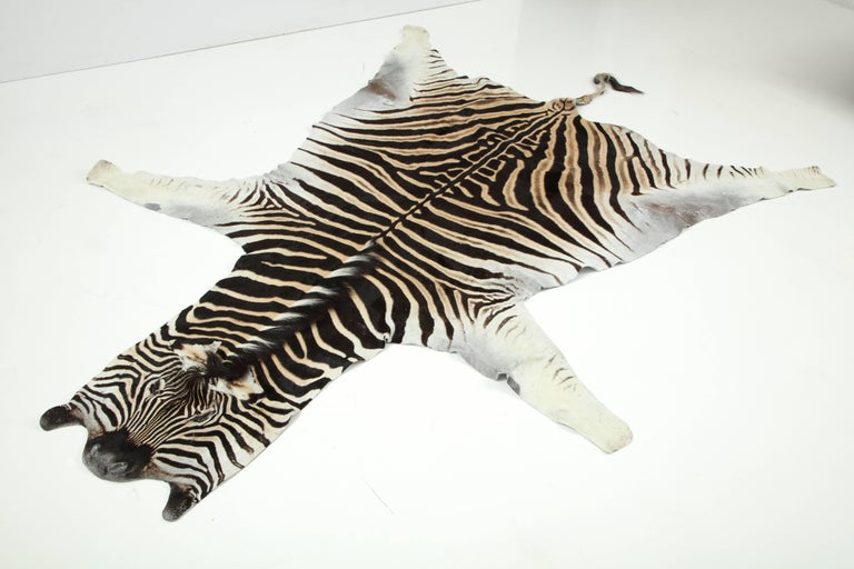 Beautiful zebra hide from South Africa. It is backed with wool fabric and trimmed with leather.