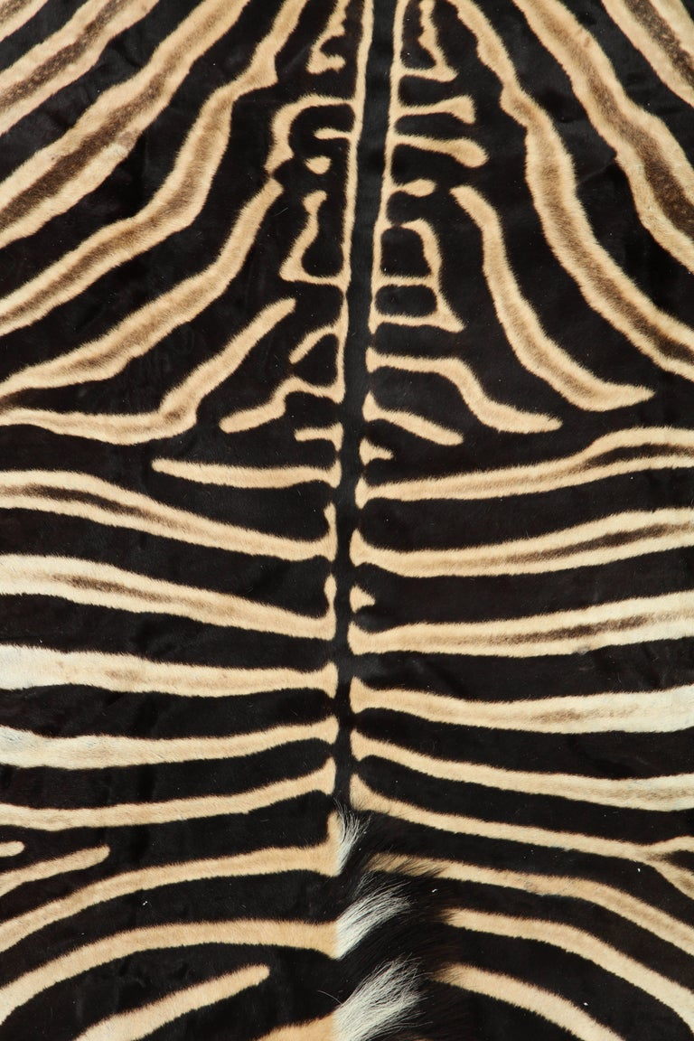 South African Zebra Hide Rug, Vintage For Sale