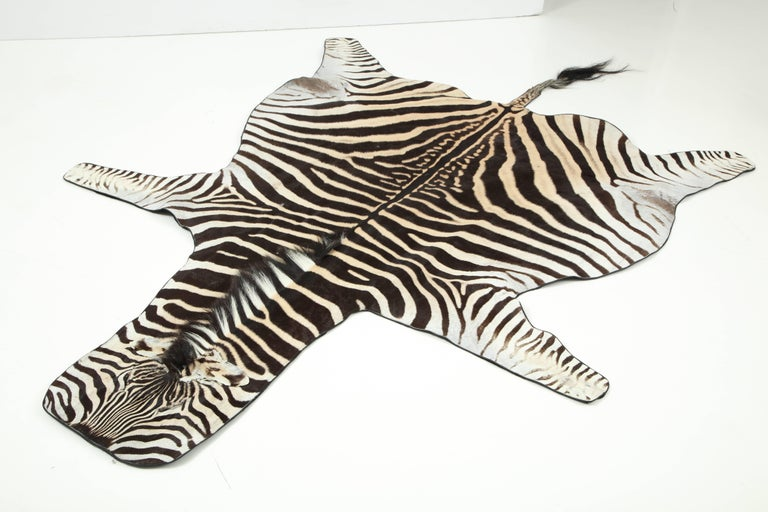 Zebra rug from South Africa. The hide is backed with a wool fabric and trimmed with leather.
