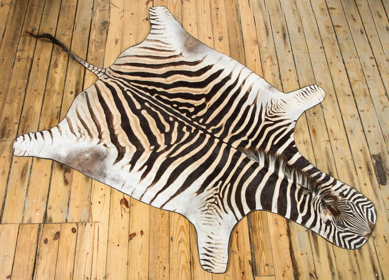 Decorative zebra rug from South Africa. The hide is backed with a wool fabric and trimmed with leather.