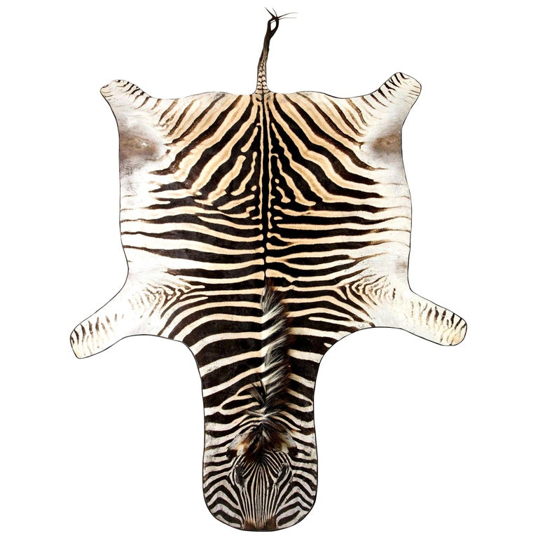 Zebra Rug, South Africa, Wool Felt Backed with Leather Trim, New Hide, In Stock For Sale