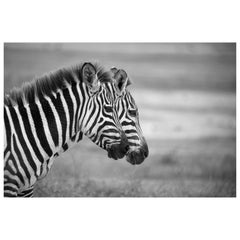 """""""Zebras,"""" black and white photograph by Carolyn Schroeder"""